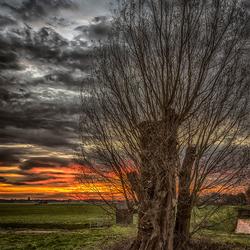 boom zonsopkomst
