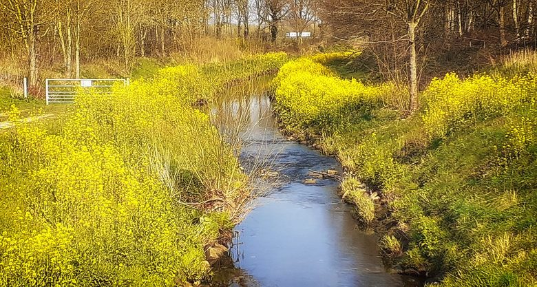 Voorjaar - Voor het eerst in bijna twee naar buiten.<br /> Heb een kort fietstochtje gemaakt, hier steek ik de Geleenbeek over<br /> die net Sittard