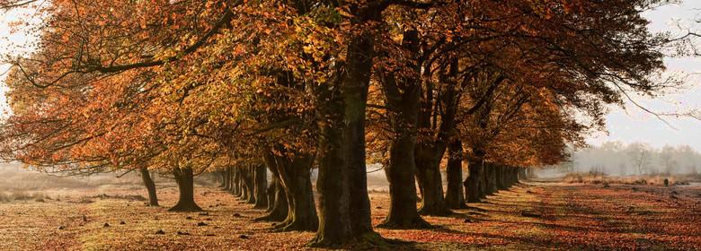Leersumse Veld - Het Leersumse Veld 21 november 2014<br /> Deze rij beuken links en rechts gefotografeerd. Beide foto&#039;s aan elkaar geplakt.<br /