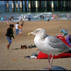 op een aardige dag in september op het strand van scheveningen bij de Pier.