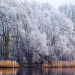Winter rond Zwolle