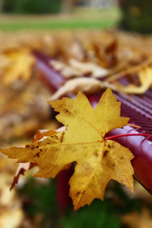 herfst - herfstblad