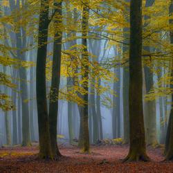 Bomen en mist