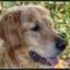 Onze hond Mazzel