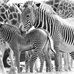 de mooie tekeningen van een dier