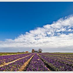 Voorjaar op Texel 2