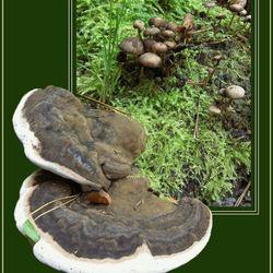 Twee soorten in het mos