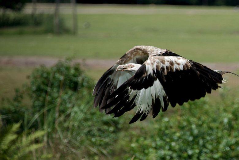 Vogelvlucht2 - vogelvlucht