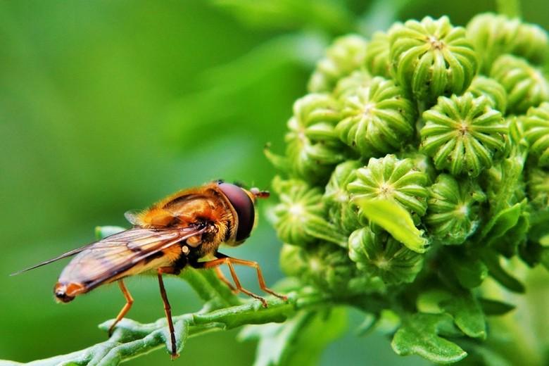De wereld van een zweefvlieg - Door de ogen van een zweefvlieg lijkt alles ineens gigantisch!