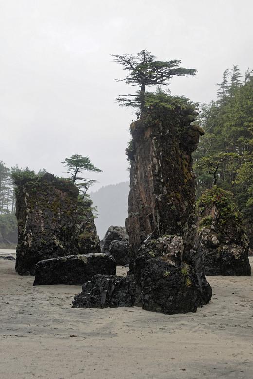 San Joseph Bay - Rotsen bij San Joseph Bay zijn fraai begroeid met kleine boompjes, alsof het bonsai zijn.