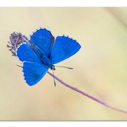 Blauw, blauwer....