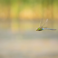 Super Dragonfly