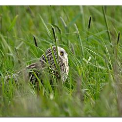 tussen het gras!