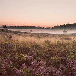 Heide-panorama