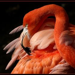 Nice feathers!