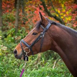 Paardenportret in herfstkleuren