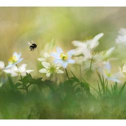 Spring is in the air -kleur-