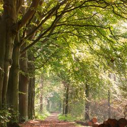 Sfeervol bos