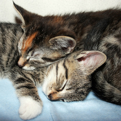 slapende poezen