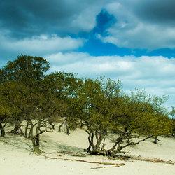 Apart licht op de Drunense duinen