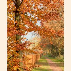 kleuren van de herfst .......
