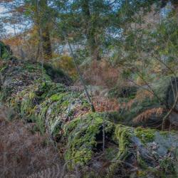 Kringloopboom - Duizendjarige Den.