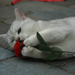 mijn bloem!