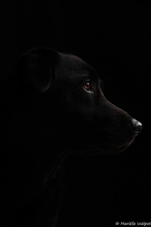 Black on black -