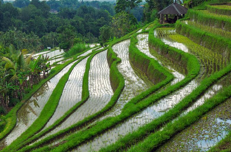 Jatiluwih - De rijstterrassen van Jatiluwih, Bali.
