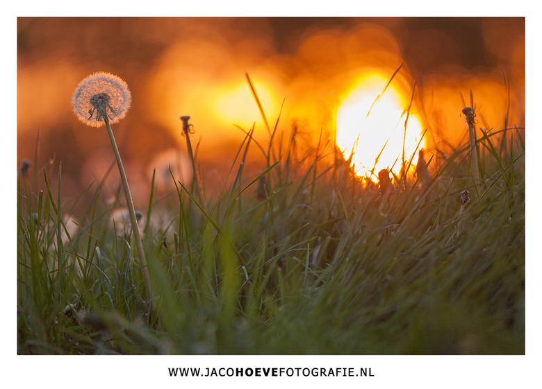 11 mei 2015 - De laatste zonnestralen van deze mooie lentedag.