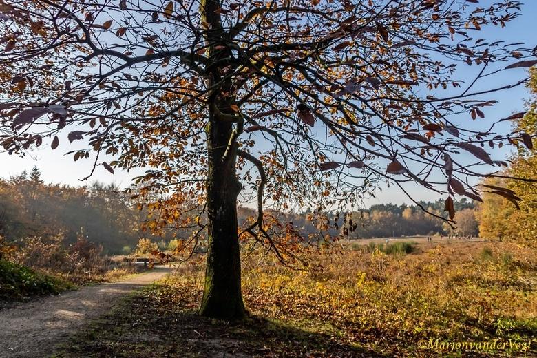 Herfst op z'n mooist - Het was &#039;n schitterende dag vandaag.<br /> <br /> Iedereen hartelijk dank voor alle reacties &amp; waardering voor mijn