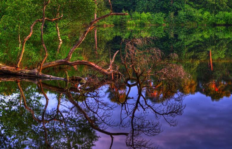 Confusion in the woods._01 - Ik hou van het bos alleen maar om er te lopen en af en toe een foto te nemen!