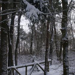 In het Graafse bos