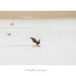 Bird Impresionism - Final