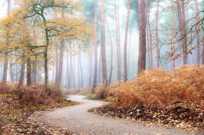 Misty Forest - Een mistige ochtend in het bos met net nog een beetje kleur