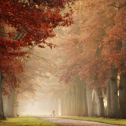 Walk to autumn
