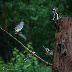 vogels in de regen