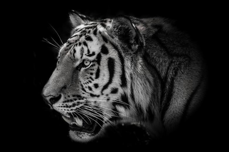 Tiger Art - Tijger probeersel