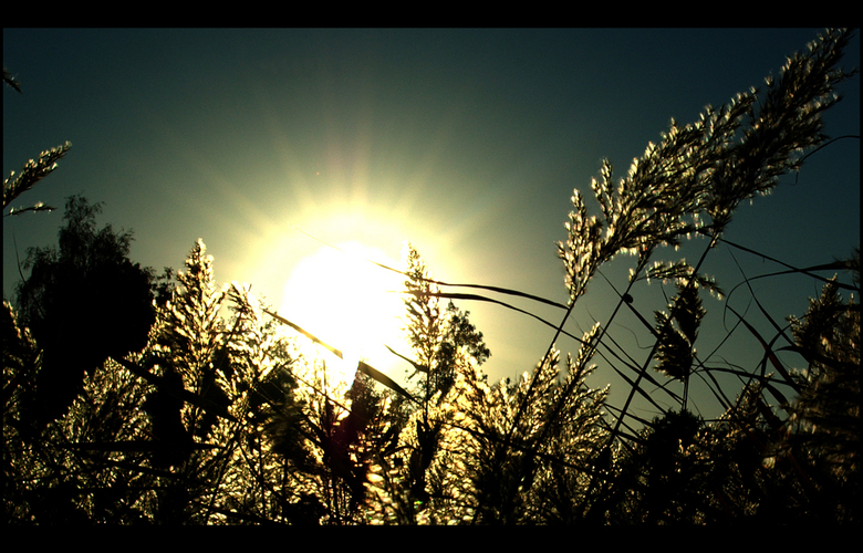Blinded By The Light - Riet met laag staande zon,wat aan de niveaus getrokken in psp,zal voor sommigen te donker zijn,maar is mijn ding.<br /> Grtz T