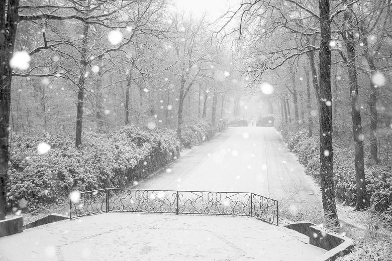 Even winter 2 - Ondanks dat het nu vrijwel helemaal weg is gedooid toch nog maar een plaatje van afgelopen zondag, zon was er niet maar sneeuw des te