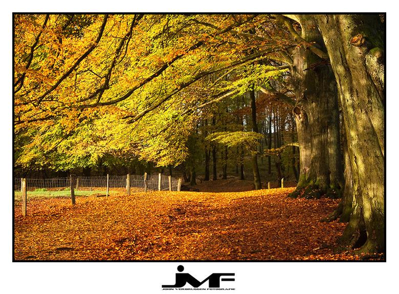 Season of colors (5) - Locatie: Posbank, Nationaal Park de Veluwezoom