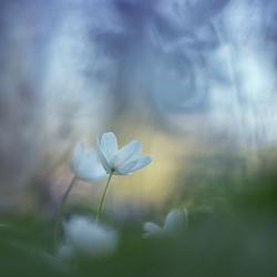 Awakenings of spring