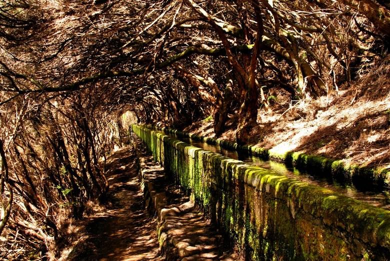 Bizarre bomen - Tijdens een wandeling op Madeira kwam ik deze bomen tegen... door de groene kleur van het kanaal en de schaduw van de overgroeiende bo