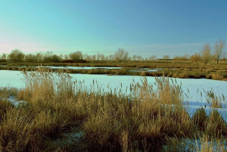 Slochter Ae - Een waterrijk natuurgebiedje bij het Groningse Woudbloem ten zuiden van de Slochter Ae. In het seizoen wemelt het er van de (water)vogel