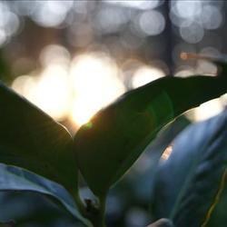 Zon tussen de bladeren door