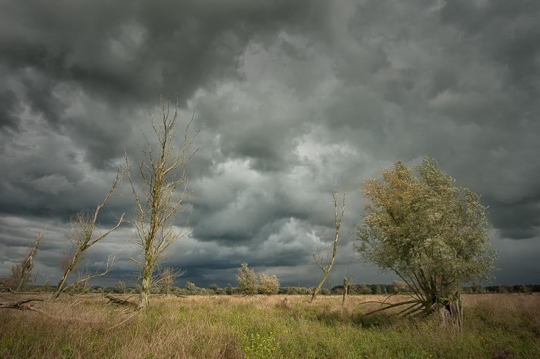 De storm trekt voorbij....(Oostvaardersplassen)  (uitvergroot het mooist) - De storm trekt voorbij met en met de zon in de rug krijg je dan vaak bijzo