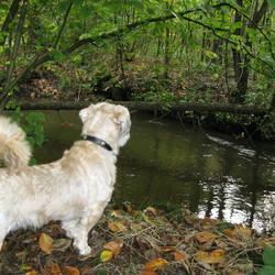 Kijken naar het stromende water