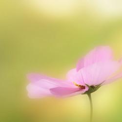 Pink dream....