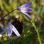 lente amelisweerd
