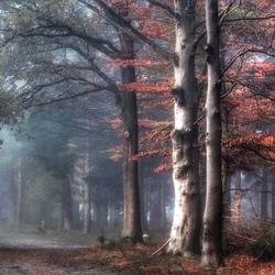Mist in het bos.